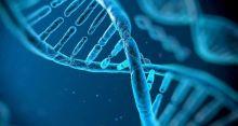 Genes active after death