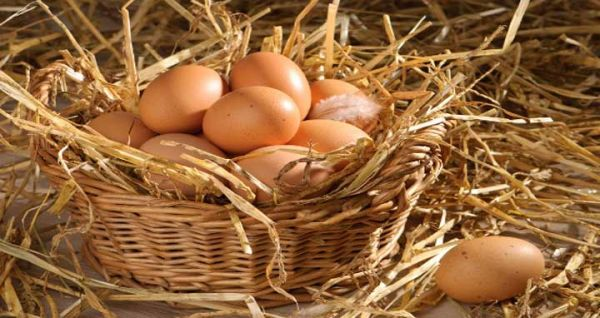 An egg a day may keep the doctor away
