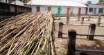 চিতলমারীতে জমেনি কোরবানীর পশুর বাজার