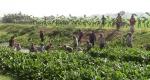 ঝিনাইদহে স্বেচ্ছাশ্রমে৬ কিলোমিটার সেচ খাল সংস্কার