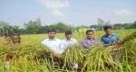 ডিমলায় ব্রি ধান-৭২ প্রদশর্নীর কৃষক মাঠ দিবস অনুষ্ঠিত