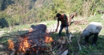 বান্দরবানে আফিম বাগান পুড়িয়ে ধ্বংস করেছে নিরাপত্তা বাহিনী