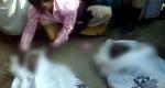 আশুলিয়ায় ইটবোঝাই ট্রাক নদীতে: ৪ জনের মরদেহ উদ্ধার