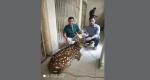 সোনাগাজীতে বনের হরিণ লোকালয়ে