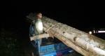 পেকুয়ায় চোরাই গাছসহ গাড়ী জব্দ করলো বনবিভাগ