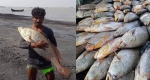 জেলের জালে ধরা পড়ল ৪০ লাখ টাকার পোয়া মাছ