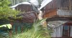 পিরোজপুরে ঘূর্ণিঝড় 'বুলবুল' আঘাতে ক্ষতিগ্রস্থ নদীপাড়ের গ্রামবাসী