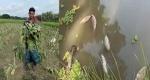 কালীগঞ্জে পুকুর ও ফসলি জমিতে দুর্বৃত্তায়ন : সর্বশান্ত কৃষক
