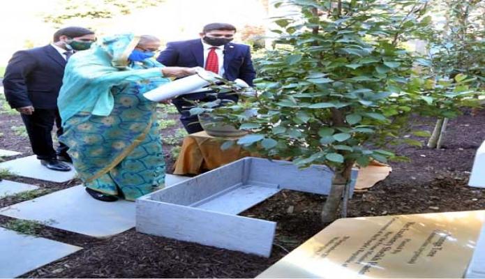 বৃহস্পতিবার প্রধানমন্ত্রী শেখ হাসিনা যুক্তরাষ্টের ওয়াশিংটন ডিসি'তে 'বাংলাদেশ হাউস' প্রাঙ্গণে ফ্রিঞ্জ গাছের চারা রোপণ করেন -পিআইডি