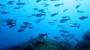 মাছশূন্য হতে পারে বঙ্গোপসাগর?
