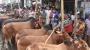 চার জেলায় পশুর হাট না বসাতে স্বাস্থ্যসেবা বিভাগের চিঠি